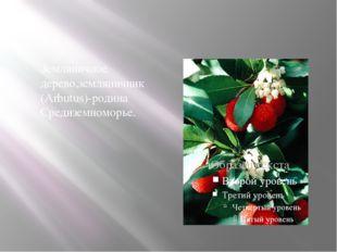 Земляничное дерево,земляничник (Arbutus)-родина Средиземноморье.