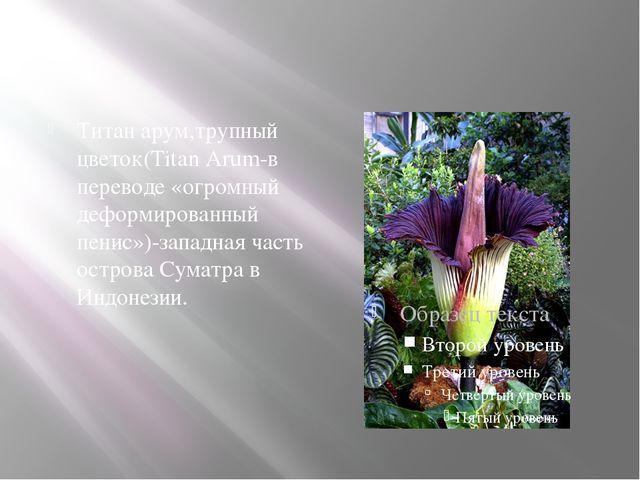 Титан арум,трупный цветок(Titan Arum-в переводе «огромный деформированный пе...