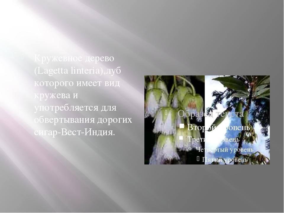 Кружевное дерево (Lagetta linteria),луб которого имеет вид кружева и употреб...