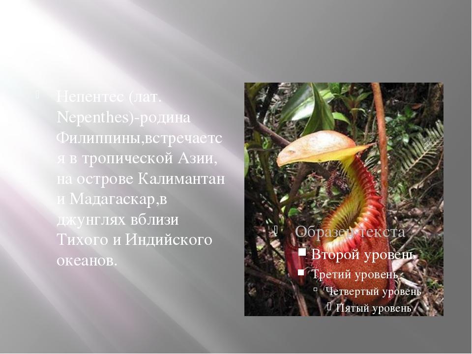 Непентес (лат. Nepenthes)-родина Филиппины,встречается в тропической Азии, н...