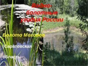 Водно-болотные угодия России Болото Моховое (Саратовская область)