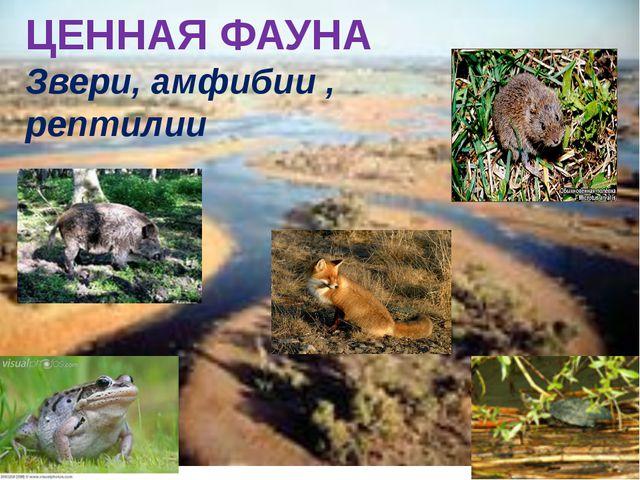 ЦЕННАЯ ФАУНА Звери, амфибии , рептилии
