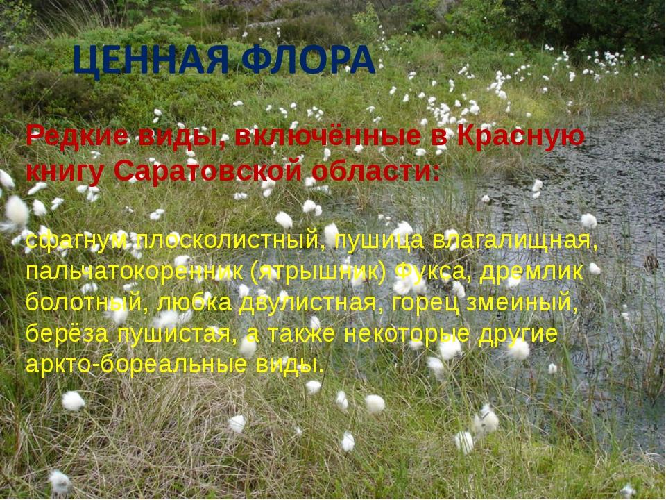 Редкие виды, включённые в Красную книгу Саратовской области: сфагнум плосколи...