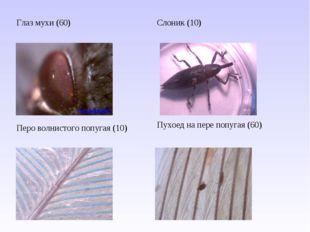 Глаз мухи (60)Слоник (10) Перо волнистого попугая (10) Пухоед на пере попуг