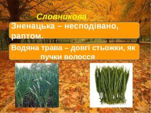 Словникова робота Зненацька – несподівано, раптом. Водяна трава – довгі стьо