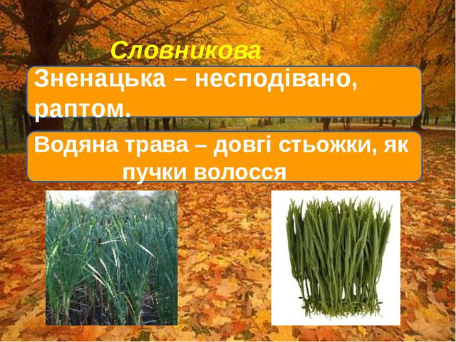 Словникова робота Зненацька – несподівано, раптом. Водяна трава – довгі стьо...