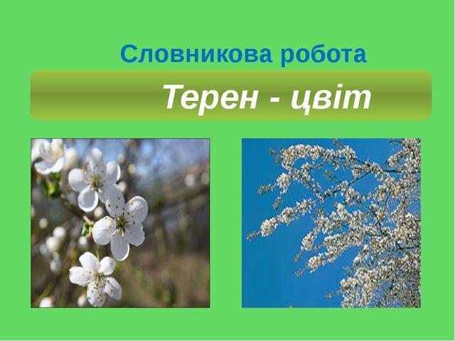 Словникова робота Терен - цвіт