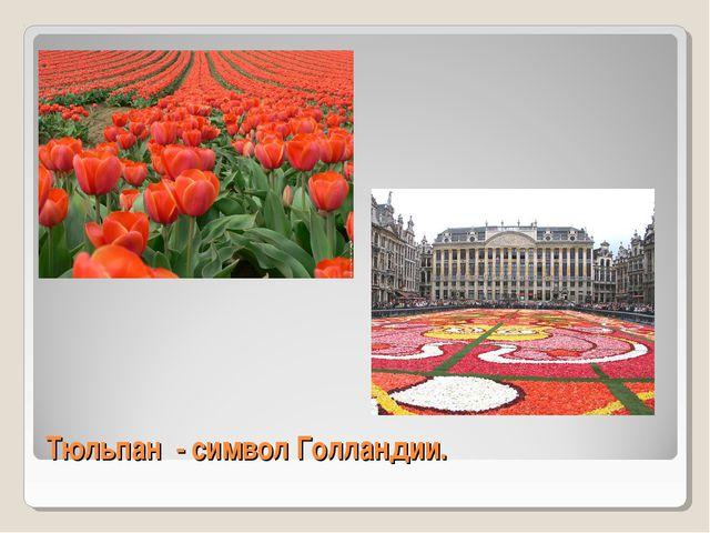 Тюльпан - символ Голландии.
