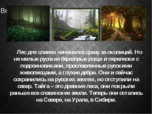 Лес для славян начинался сразу за околицей. Но не милые русские березовые ро