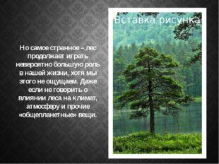 Но самое странное – лес продолжает играть невероятно большую роль в нашей жиз