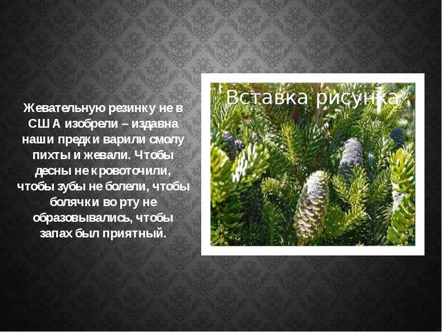 Жевательную резинку не в США изобрели – издавна наши предки варили смолу пих...