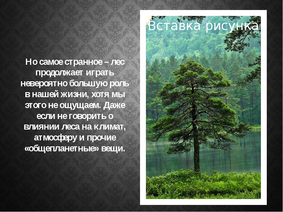 Но самое странное – лес продолжает играть невероятно большую роль в нашей жиз...