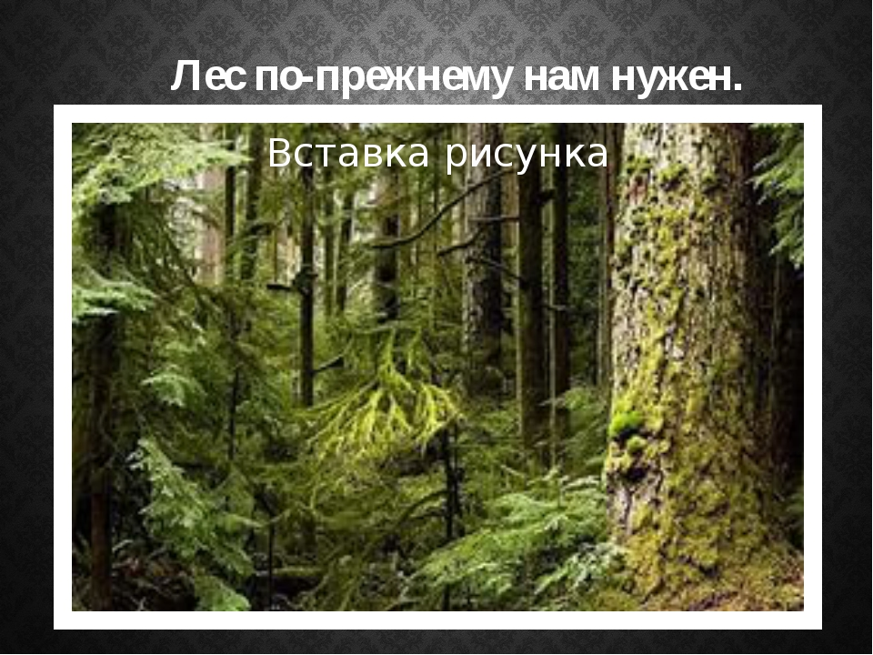 Лес по-прежнему нам нужен.