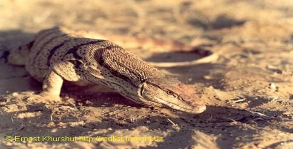 D:\пустыня 18.jpg