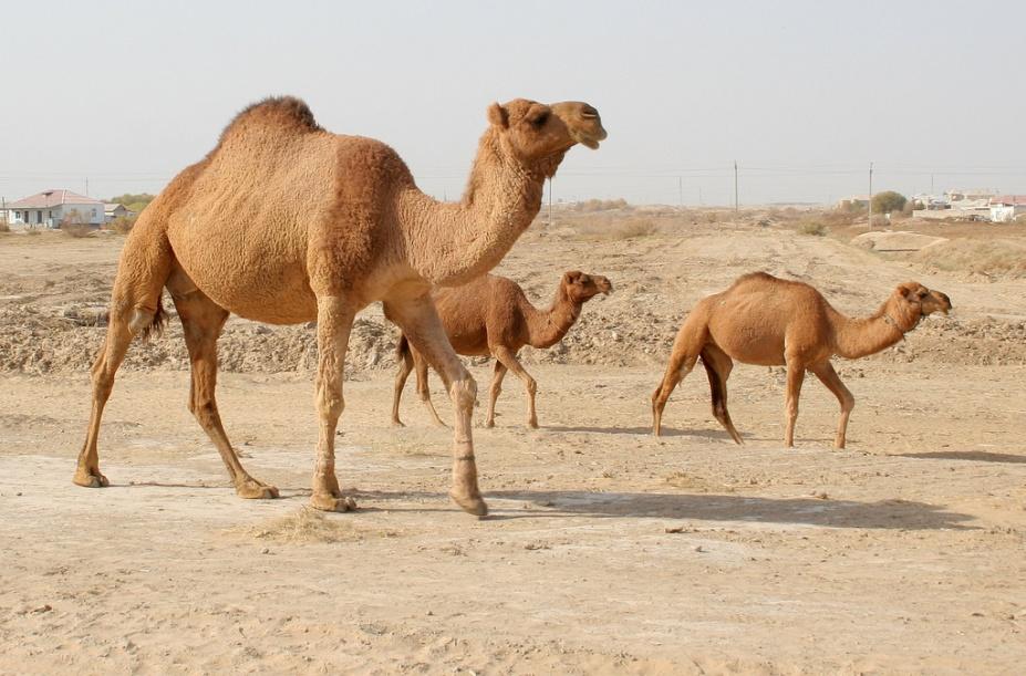 http://umm4.com/wp-content/uploads/2012/02/afrika-zhivotnye-pustyni-saxara-3.jpg
