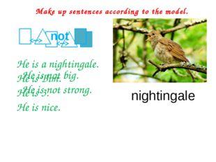 He is a nightingale. He is Bim. He is 3. He is nice. Make up sentences accor