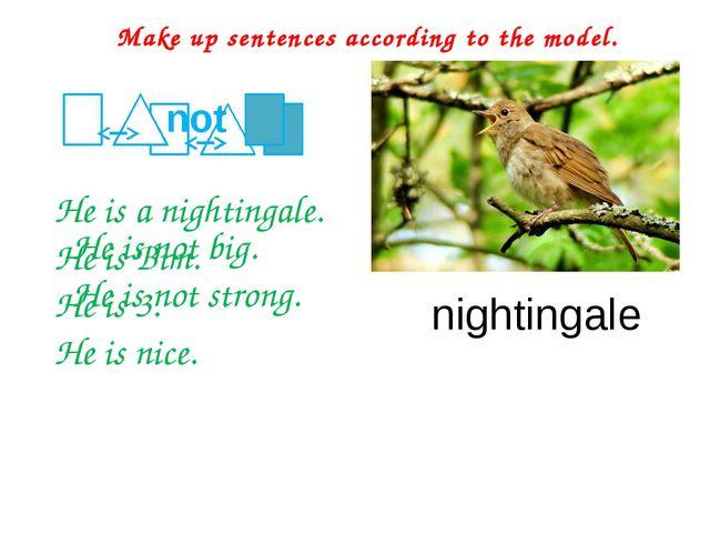 He is a nightingale. He is Bim. He is 3. He is nice. Make up sentences accor...