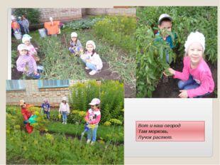 Вот и наш огород Там морковь, Лучок растет.
