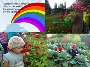 Здравствуй, милый мой цветок, Лете гость весенний! Как красиво ты расцвёл Все