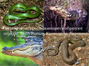 Современные пресмыкающиеся образуют отряды: Чешуйчатые, Крокодилы, Черепахи.