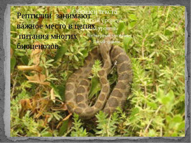 Рептилии занимают важное место в цепях питания многих биоценозов.