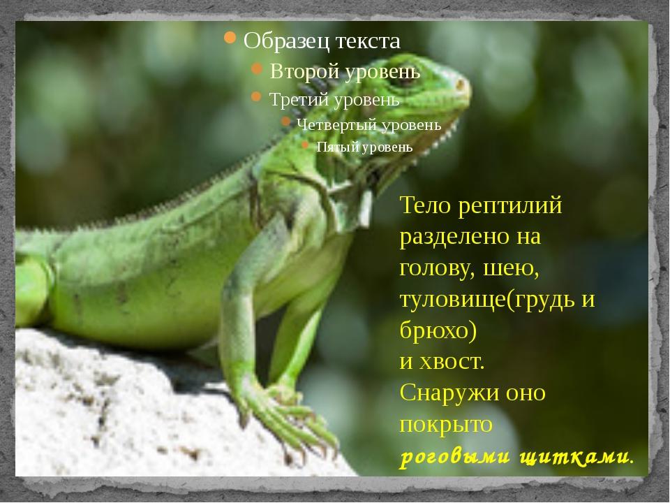 Тело рептилий разделено на голову, шею, туловище(грудь и брюхо) и хвост. Сна...