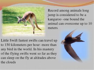 Record among animals long jump is considered to be a kangaroo -one bound the