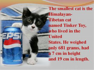 The smallest cat is the Himalayan-Tibetan cat named Tinker Toy, who lived in