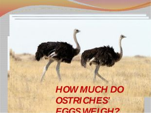 HOW MUCH DO OSTRICHES' EGGS WEIGH?