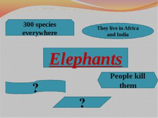 Elephants 300 species everywhere They live in Africa and India People kill th