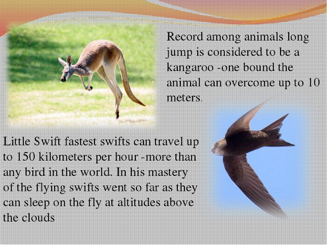 Record among animals long jump is considered to be a kangaroo -one bound the...
