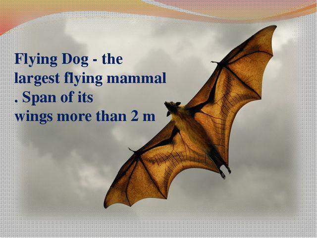 FlyingDog- the largestflyingmammal.Spanof its wingsmore than 2m