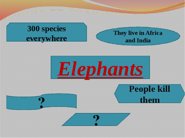 Elephants 300 species everywhere They live in Africa and India People kill th...