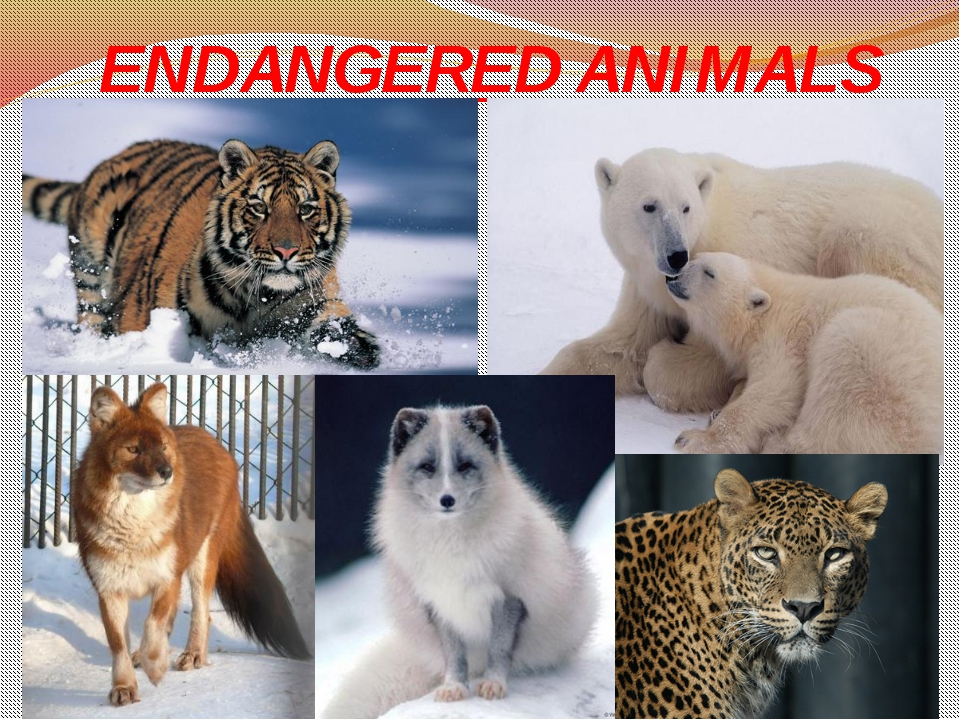 Most endangered animals with names