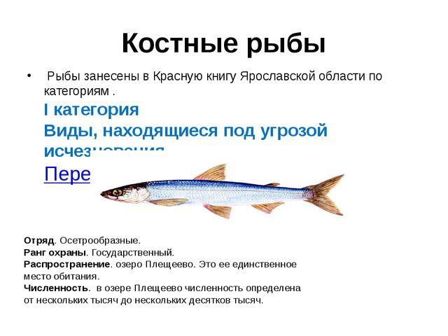 Костные рыбы Рыбы занесены в Красную книгу Ярославской области по категориям...