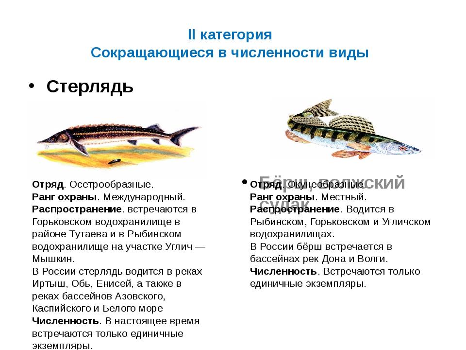 II категория Сокращающиеся в численности виды Стерлядь Бёрш, волжский судак О...
