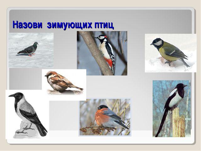 Назови зимующих птиц