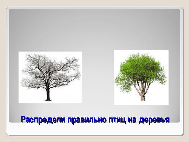 Распредели правильно птиц на деревья