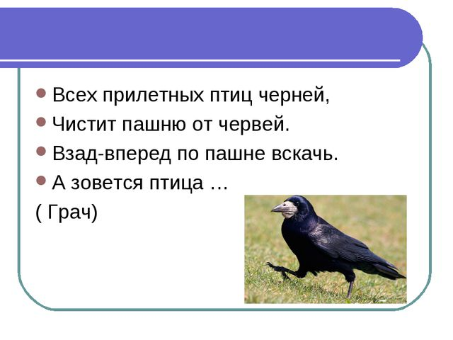 Всех прилетных птиц черней, Чистит пашню от червей. Взад-вперед по пашне вска...