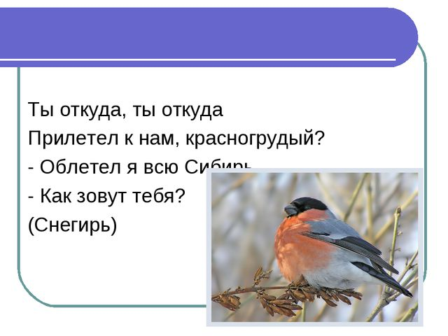 Ты откуда, ты откуда Прилетел к нам, красногрудый? - Облетел я всю Сибирь. -...