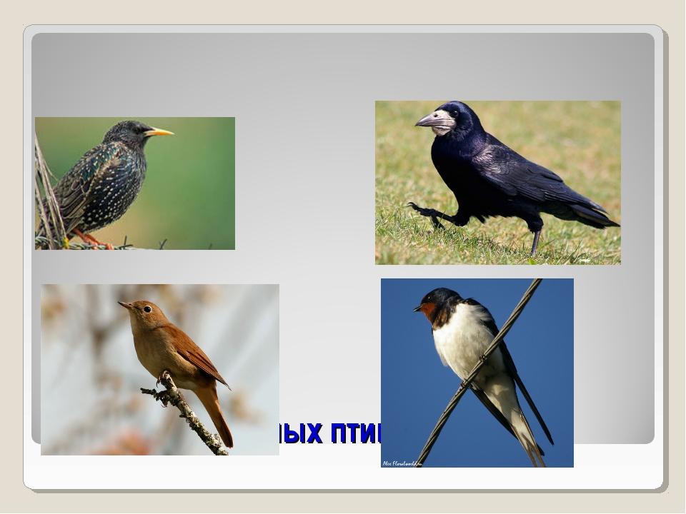 Назови перелётных птиц
