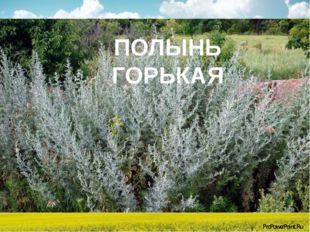 ПОЛЫНЬ ПОЛЫНЬ ГОРЬКАЯ ProPowerPoint.Ru
