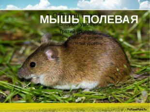 МЫШЬ ПОЛЕВАЯ ProPowerPoint.Ru
