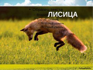 ЛИСИЦА ProPowerPoint.Ru