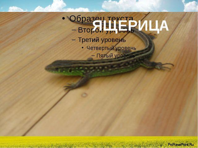 ЯЩЕРИЦА ProPowerPoint.Ru