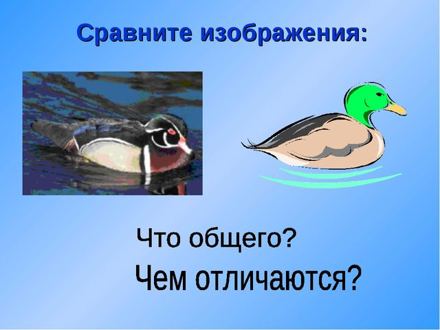Сравните изображения: