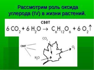 Рассмотрим роль оксида углерода(IV) в жизни растений.