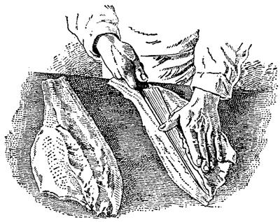Срезание реберных костей с мякоти