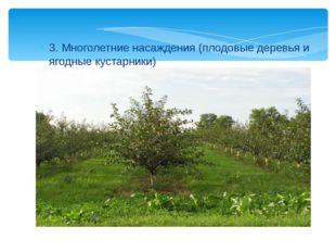 3. Многолетние насаждения (плодовые деревья и ягодные кустарники)