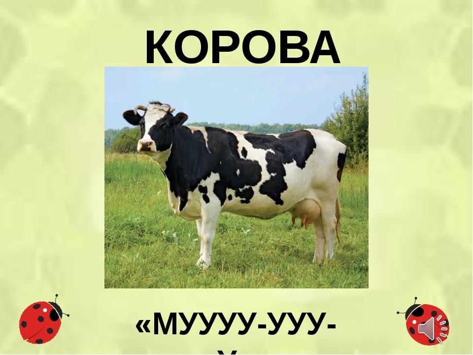 КОРОВА «МУУУУ-УУУ-У»
